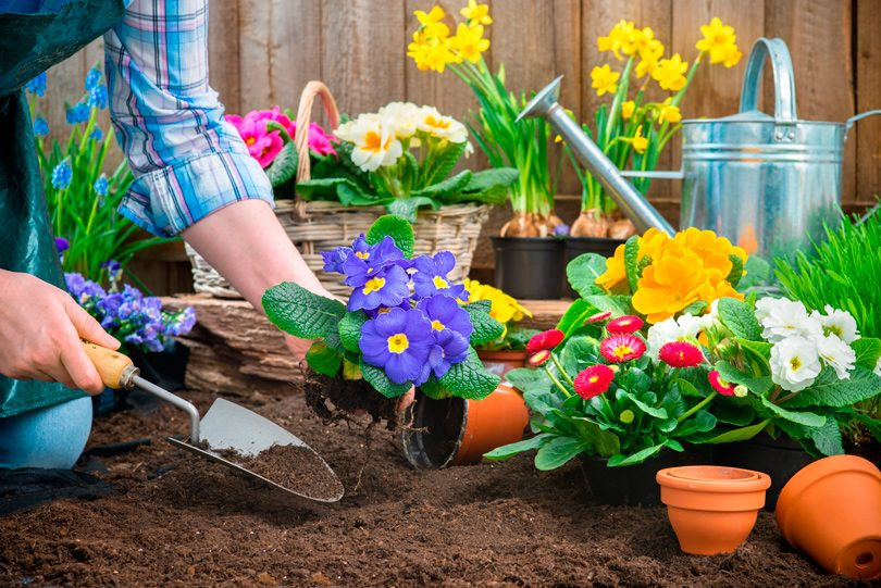 spring_flowers_work4